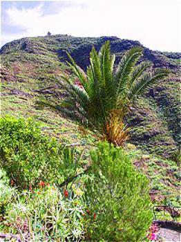 Gomera - ideal für Wanderer