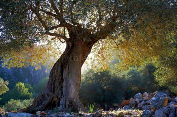 Finca-Hotel in der Natur - Ruhe und Erholung