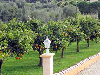 Garten mit Orangenbäumen