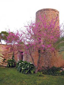Alte Mühle im Garten